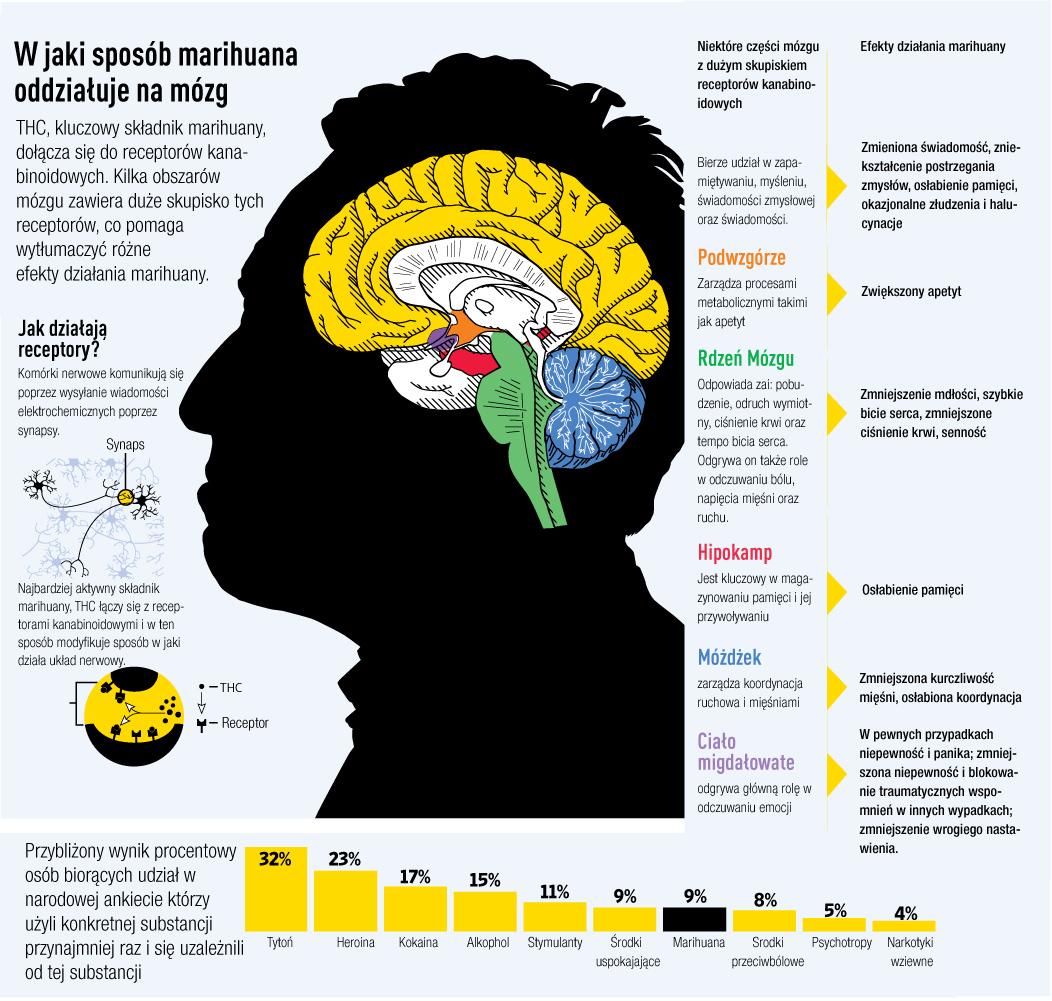 dzialanie thc na mozg