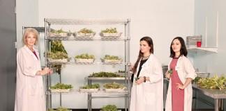 Fabryka marihuany w Kolorado