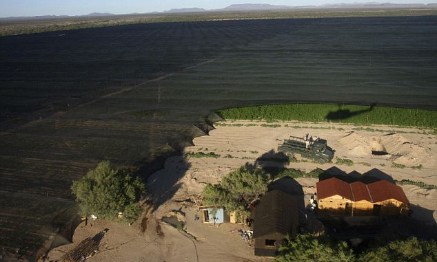 plantacja marihuany w meksyku