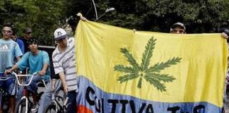 medyczna marihuana w kolumbii