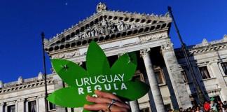 urugwaj legalizacja marihuany