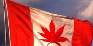 łatwiejszy dostęp do marihuany w kanadzie
