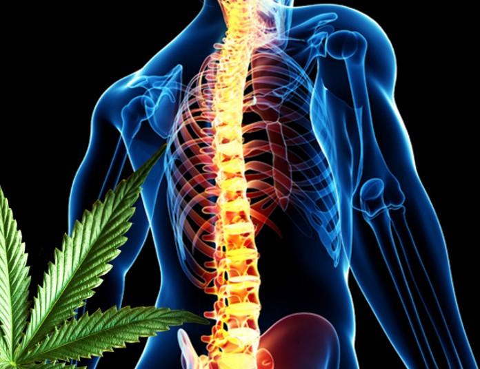 marihuana leczy urazy kregoslupa