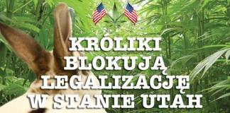 legalizacja_marihuana_utah