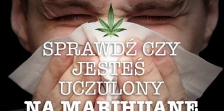 Uczulenie na marihuanę, wnioski naukowców