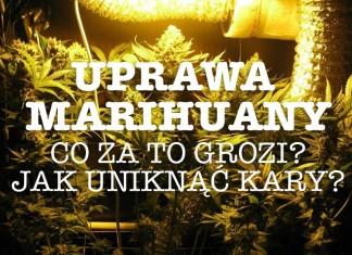 hodowla marihuany na wlasny uzytek