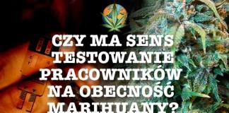 Testowanie pracowników na obecność marihuany – czy to ma sens?
