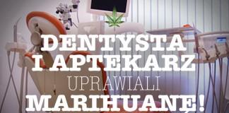 farmaceuta i stomatolog uprawiaja marihuane