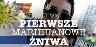 Swieto zniwa marihuany w urugwaju