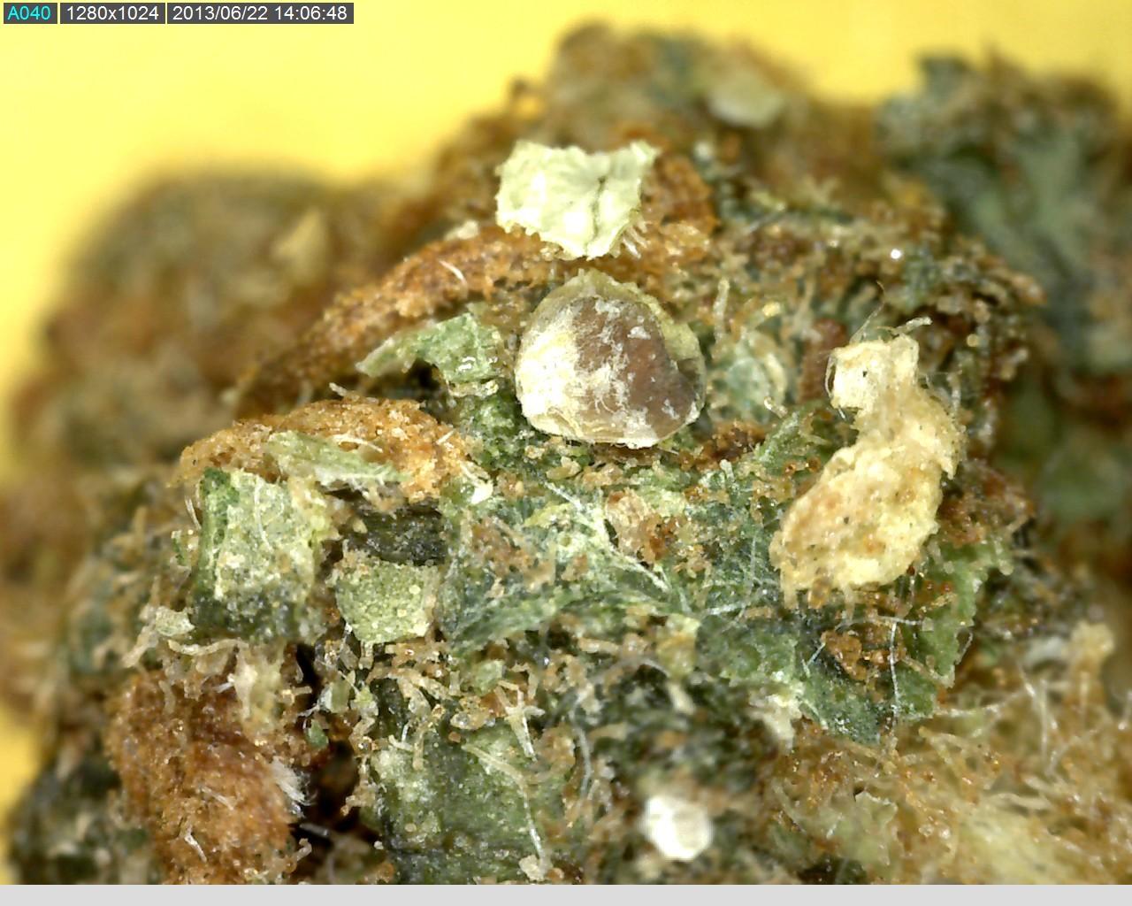 Marihuana z dosypanym piaskiem - widok pod mikroskopem