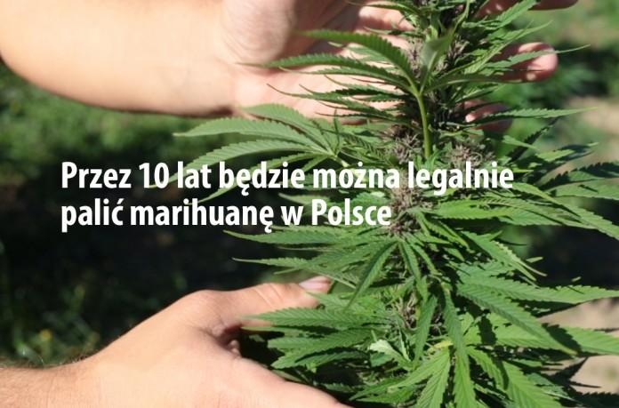 legalne palenie marihuany