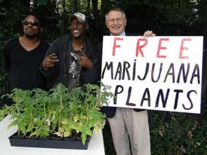 Darmowe sadzonki marihuany