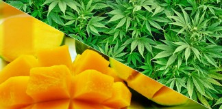 Mango do blanta