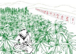 Uprawa marihuany w Korei Północnej