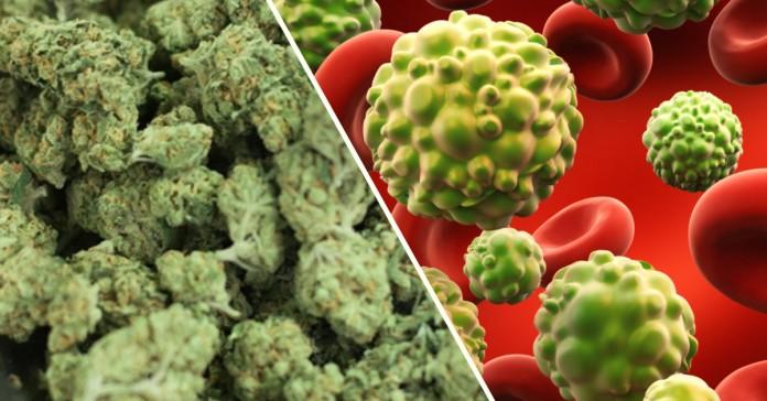 marihuana vs komórki rakowe