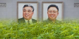 Legalne zioło w Korei Północnej