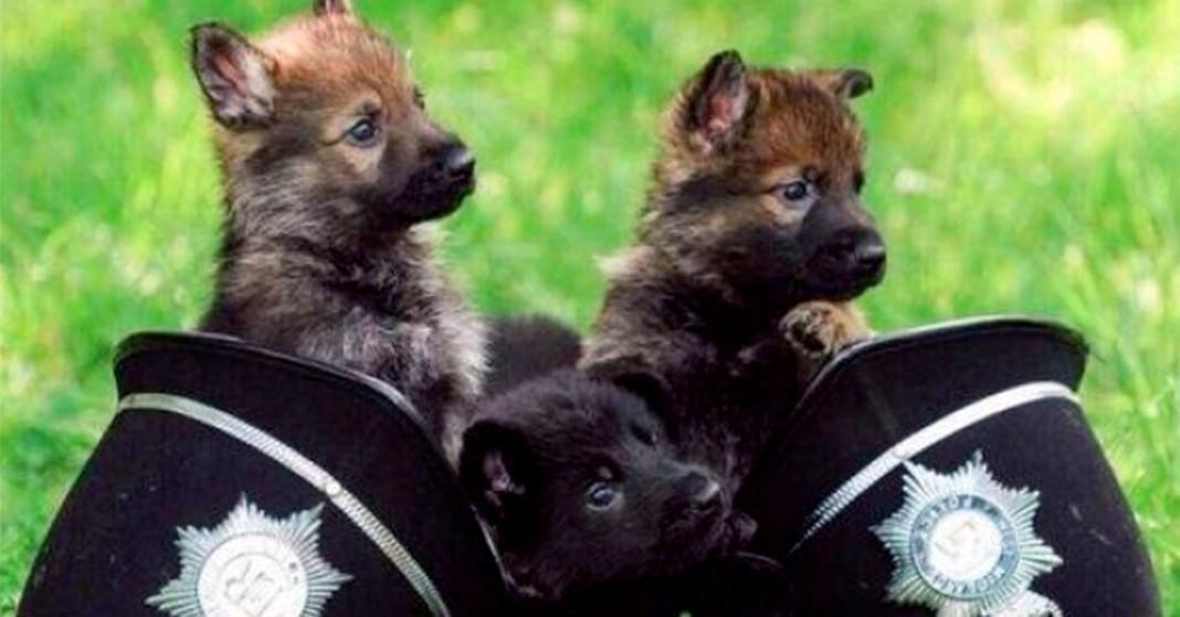 Pies posłuszny policji