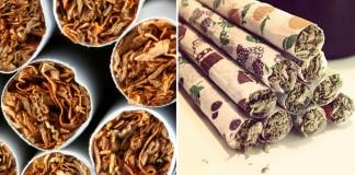 tytoń i konopie na wojennej ścieżce