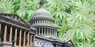 Marihuana medyczna w Stanacj