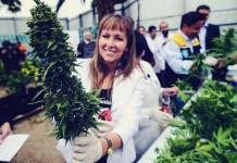 największa legalna plantacja marihuany