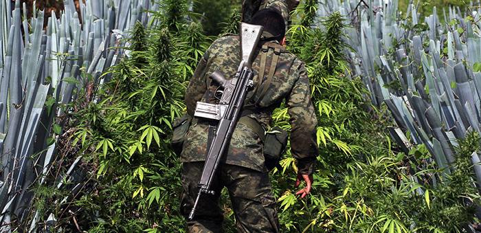 przemyt-marihuany