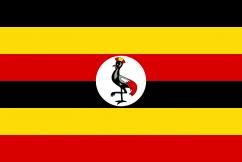Legalność Marihuany w Ugandzie