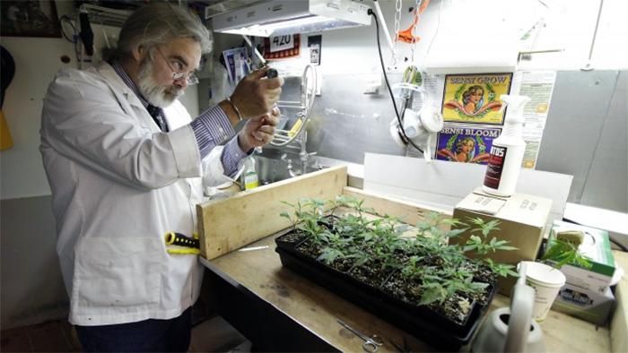 marihuana medyczna badania