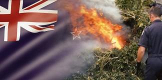 likwidacja upraw konopi w Nowej Zelandii