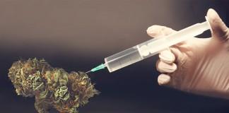 marihuana modyfikowana genetycznie
