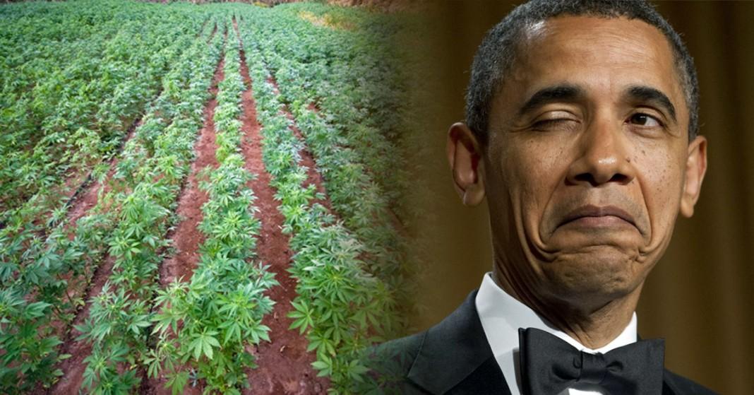 plantacja konopi amerykańskiego rządu