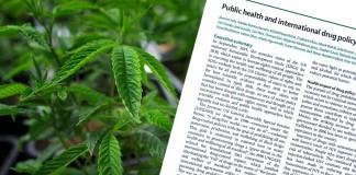 eksperci o legalizacji narkotyków