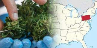 legalizacja marihuany medycznej w Transylwanii
