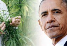 Obama za medyczną marihuaną