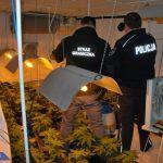 15kg marihuany oraz uprawa w domu w Mysłowicach