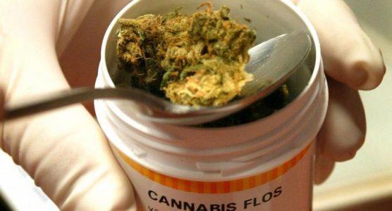 medyczna marihuana w aptece - kiedy będzie dostępna?