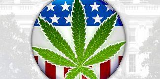wybory prezydenckie w USA marihuana