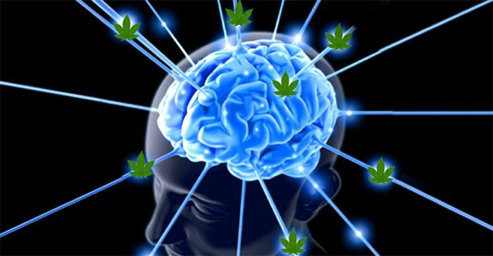 THC a mózg