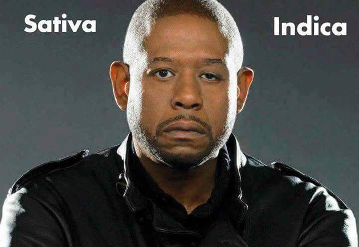 Forest Whitaker sativa indica weedmemes
