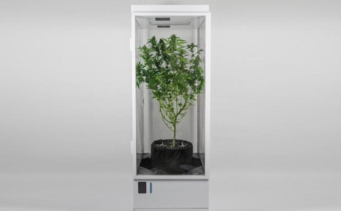 grow box 7 sensors