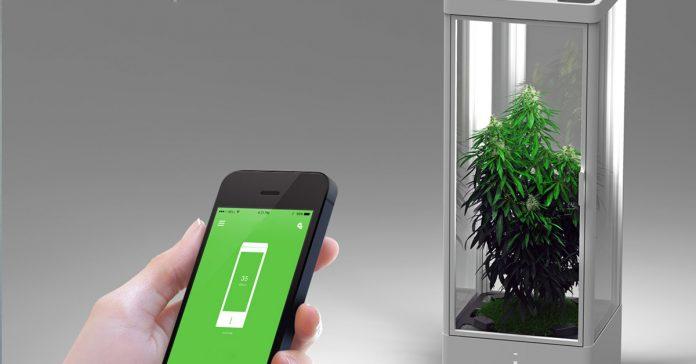 automatyczny growbox