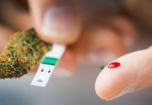 marihuana a cukrzyca