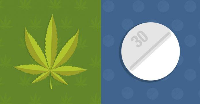 opioidy a marihuana medyczna