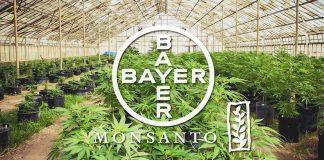 Bayer przejął Monsanto