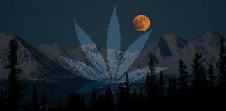 marihuana a widzenie w ciemności