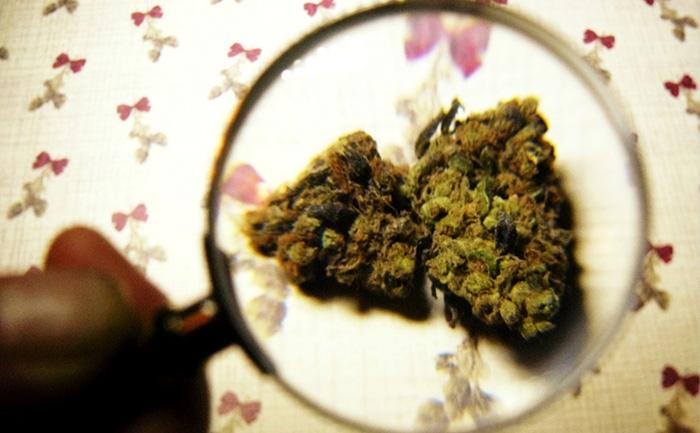 marihuana medyczna układ trawienny