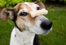 Ciasteczka z CBD dla psów nowym hitem w USA?