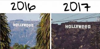 Hollyweed zamiast Hollywood