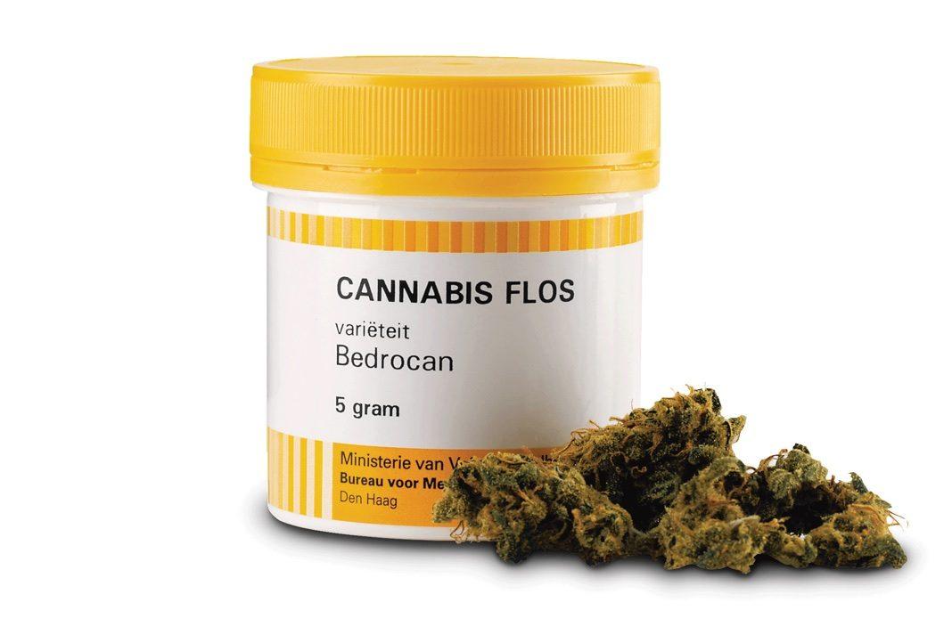 Bedrocan pierwszy producent Marihuany Medycznej