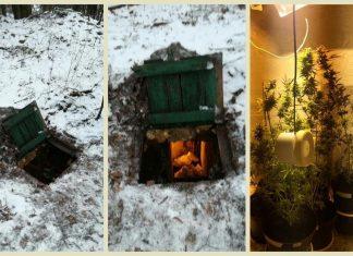 Hodowla marihuany w ziemiance w Rudnej k. Lubina