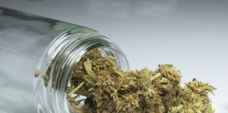 Marihuana medyczna i jej wpływ na nowotworowe, złośliwe zmiany skórne